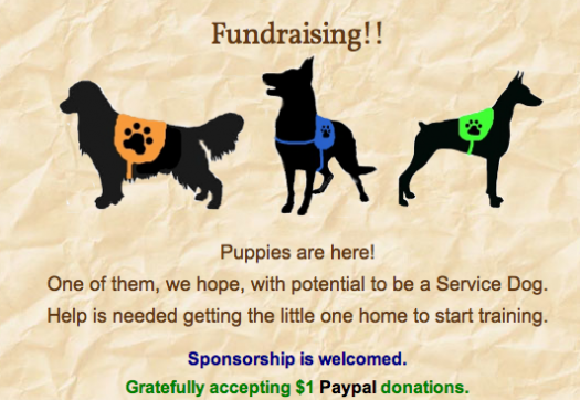 Service Dog For Autism Animal Fundraising With Gogetfunding