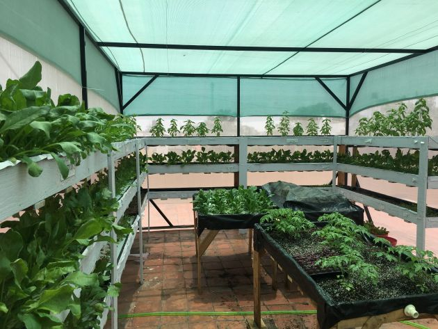 Hydrophonic Farm in a shade house -Indicative Image