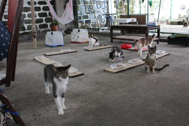 Cats in the sanctuary.